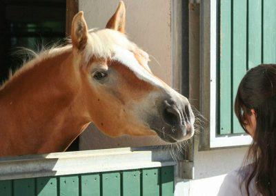 pferd-schaut-aus-box