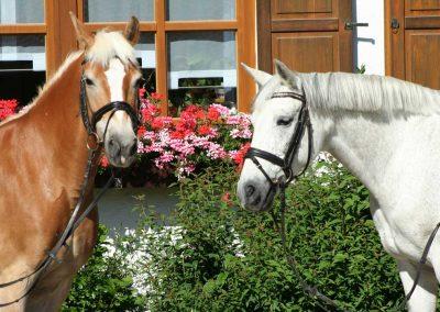 zwei-pferde-im-hof