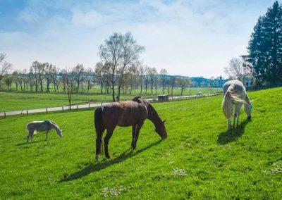 koppel-pferde